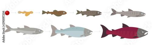 Fotografia Life cycle of the Atlantic Salmon