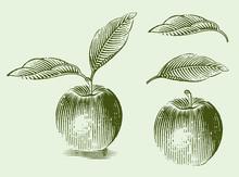 Engraved Illustration Of An Ap...
