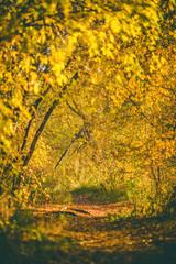 FototapetaAutumn trees in the morning.