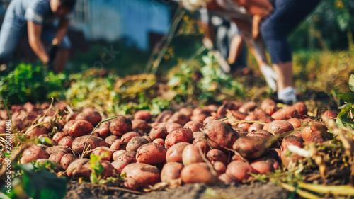 Harvest time concept Canvas-taulu