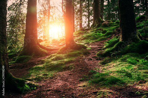 Foto auf Leinwand Schwarz tree roots and sunshine in a green forest