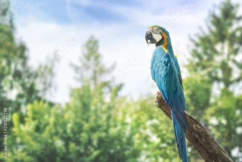 Macaw Parrot sitting on a tree branch enjoying sunset