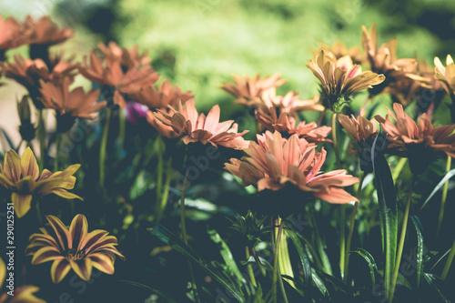 Keuken foto achterwand Bloemen Marguerites