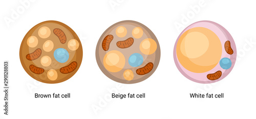 Photo Vector set of brown, beige and white fat cells