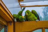 Fototapeta Tęcza - Kolorowe papużki bawiące się ze sobą