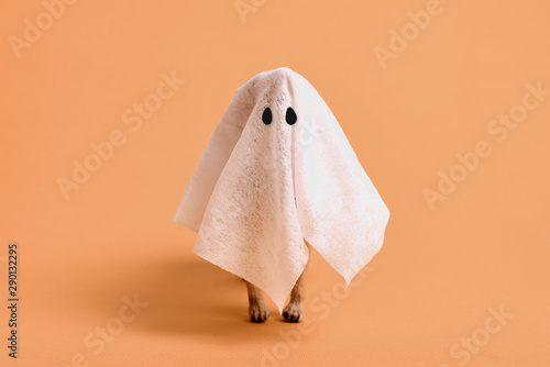 white sheet ghost with animal legs on a orange background Canvas Print