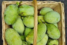 Basket Of Common Pawpaw Fruit ...