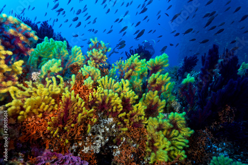 Coral reef from lastovo, Croatia