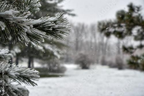Obraz na plátne  Image of fir branches under sudden spring snow.