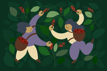 Vector Illustration Of Happy Pickers Are Harvesting Ripe Red Berries Of Coffee From Branches Of Trees. Laborers Picking Coffee In Basket By Hand. Design Pattern For Banner, Poster, Print, Package, Web