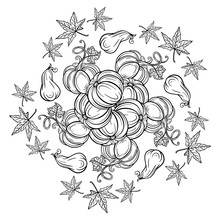 Black And White Autumn Ornament. Pumpkins And Autumn Leaves Coloring Page