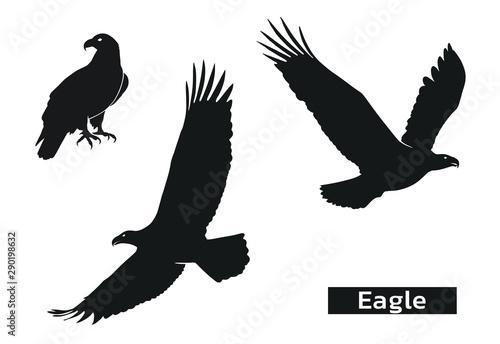 Fotografia, Obraz eagle silhouette set