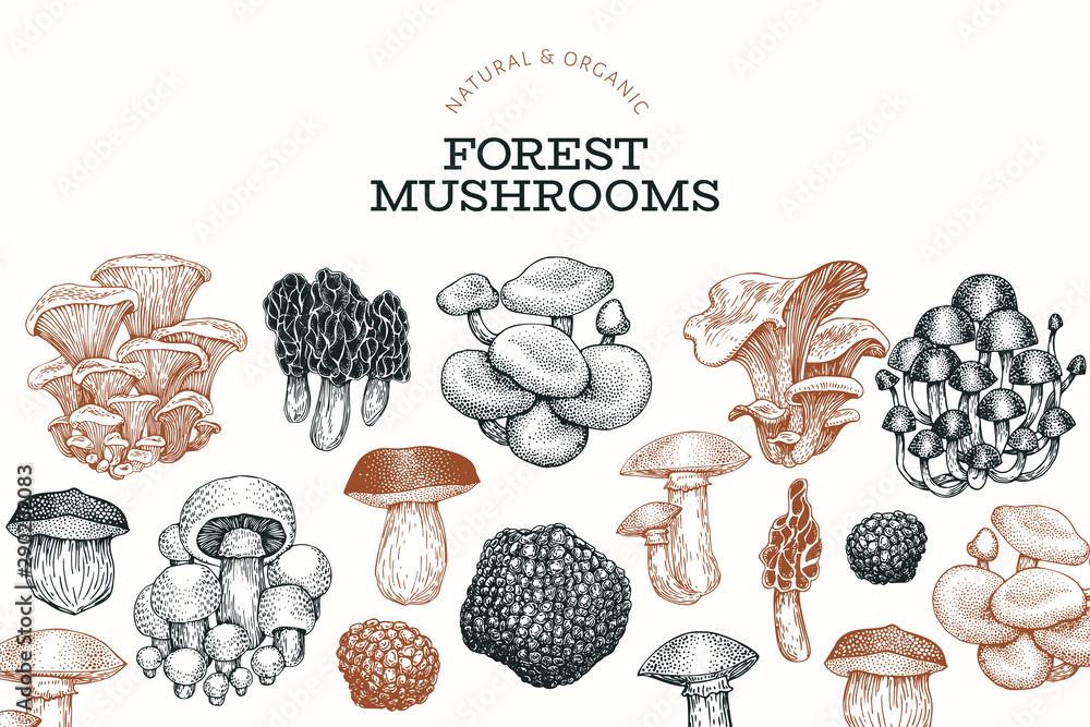 Fototapety, obrazy: Mushroom design template. Hand drawn vector food illustration. Engraved style. Vintage mushrooms different kinds background.