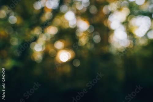 Foto op Canvas Bomen Autumn abstract background. Blurred image of beautiful sunny light and autumn leaves. Fall in forest. Tranquil moment. Sunlight through trees