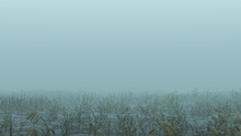 Foggy Watery Void With Reeds A...