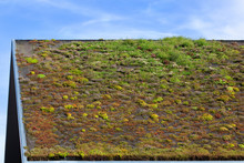 Ecological Green Roof In The N...