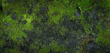 Moss Green Texture. Moss Background. Green Moss On Grunge Texture, Background. Long Web Banner