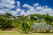Panoramic view of palm garden that covers a distillery of Rom.