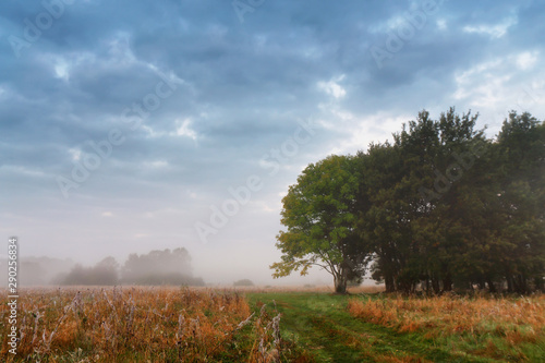 Fotografia  Overcast misty sky. Cloudy autumn foggy morning.