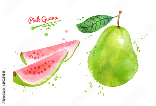 Fotografiet  Watercolor illustration of Pink Guava fruit