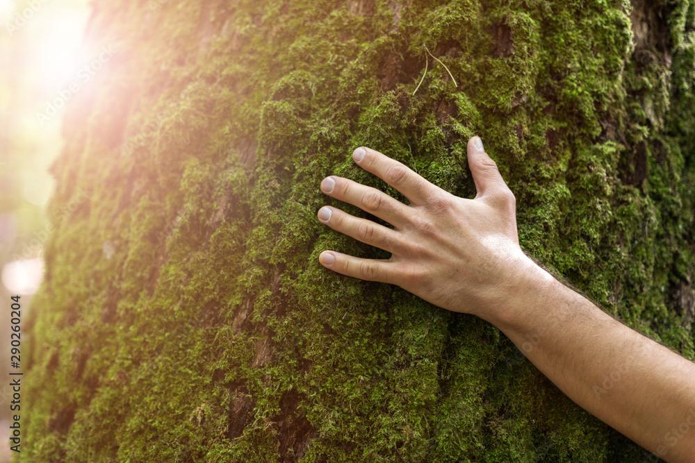 Fototapeta Man hugging tree in forest