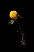 Yellow Chrysanthemum On Black Background