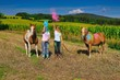 farbenspiel mit dem pferd