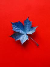 Blue Leaf On Red Background