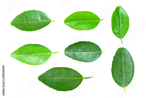 Isolated leaves on the white background Canvas Print