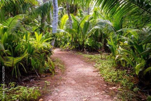 Autocollant pour porte Route dans la forêt Ground rural road in the middle of tropical jungle.