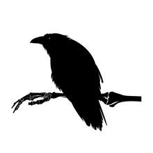 Ominous Raven Bird Sitting On ...