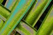 canvas print picture - Hintergrund Natur