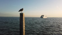 Seagull At Pole And Schiermonn...