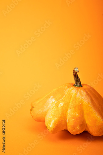 fresh gourd on bright yellow background Canvas Print