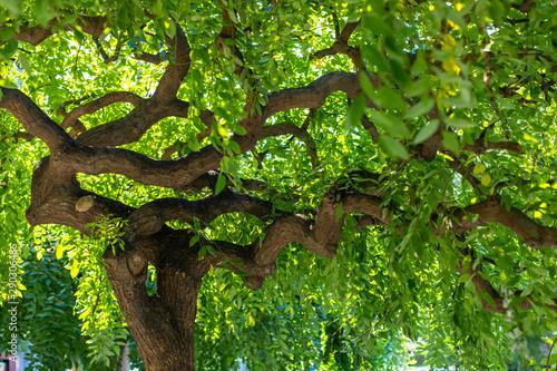 Green branchy tree Tapéta, Fotótapéta