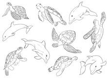 Illustration Vector Set Of Swimming Dophins And Turtle With Isolated On Background