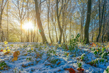 Autumn-winter Landscape, The Rays Of The Rising Sun And The First Snow In The Morning Autumn Forest