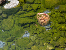 Boil Eggs In Hot Spring From Fang National Park, Chiang Mai Thailand