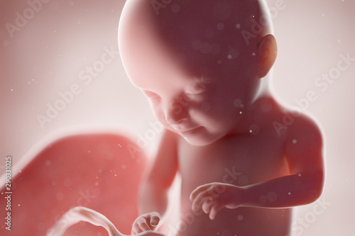 Fotografija 3d rendered medically accurate illustration of a human fetus - week 31