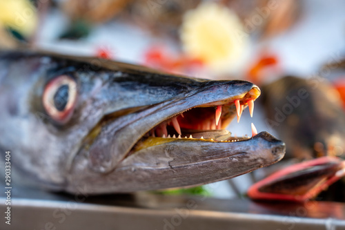 Photographie Close up on barracuda teeth