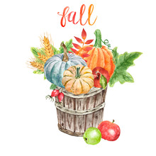Watercolor Pumpkins In A Harvest Wooden Basket, Isolated On White Background. Hand Painted Fall Seasonal Vegetables In A Bushel, Wheat, Apples And Leaves. Festive Thanksgiving Day Illustration