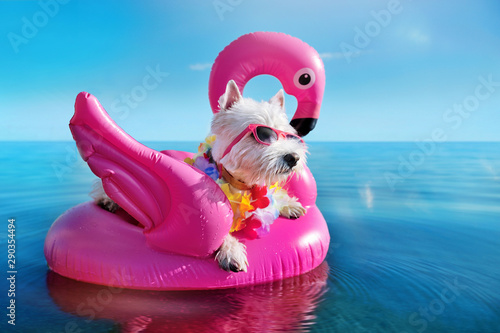 White terrier wearing tropical flower garland chilling on the pink rubber flamin Fototapet