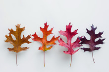 4 Different Coloured Autumn Leaves
