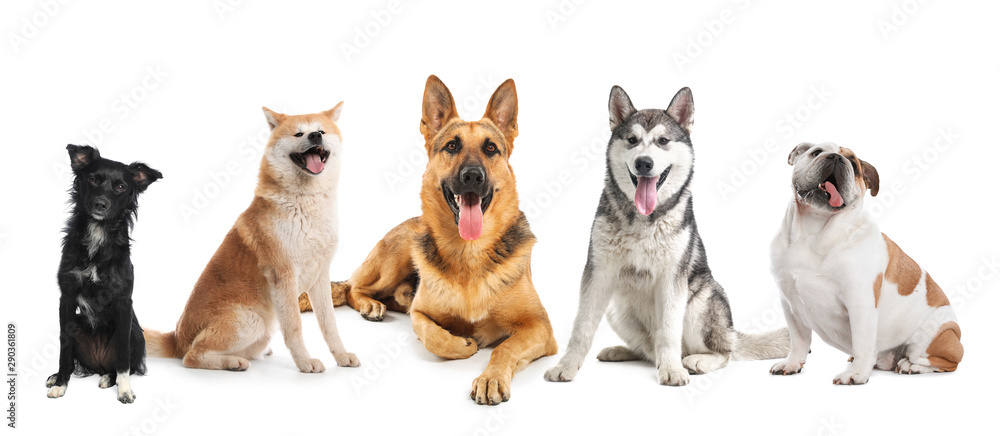 Fototapety, obrazy: Set of adorable dogs on white background