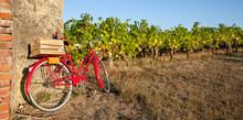 Vélo Rouge Dans Les Vigne Et ...
