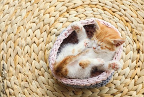 Obraz Cute little red kitten sleeping in knitted basket on wicker mat, above view - fototapety do salonu