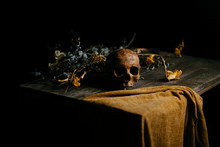 Still Life With Skull And Dried Flowers