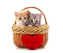 Kittens In The Basket With A T...