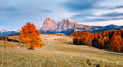 Foto auf AluDibond Herbst Scenic image of bright hills. Location Seiser Alm or Alpe di Siusi, South Tyrol, Italy.