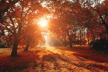 Scenic Image Of Bright Trees I...